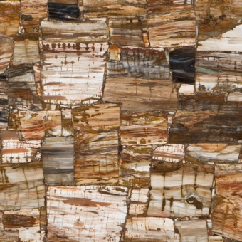 8331-petrified-wood-classic